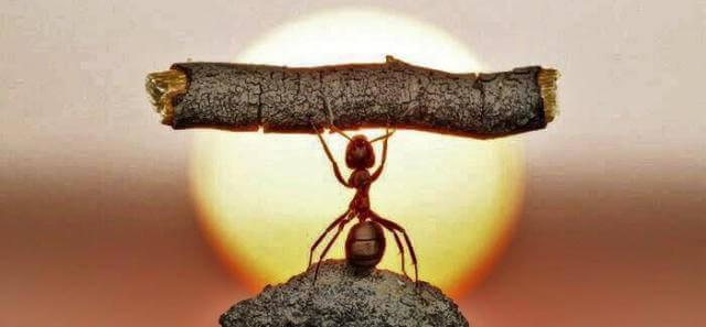 Imagem de uma formiga levantando um galho muito maior que ela, representando os indicadores de esforço.