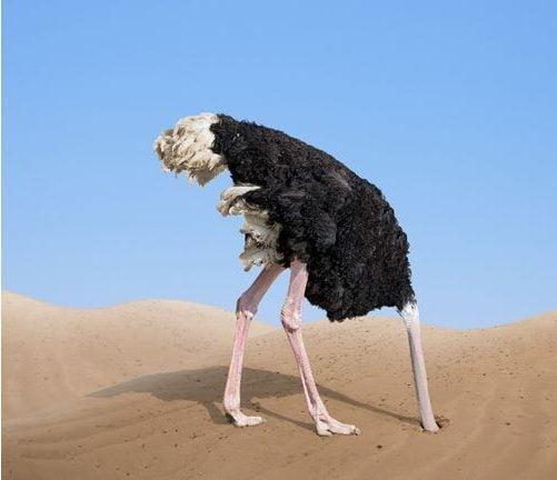 imagem de um avestruz com a cabeça na terra. imagem utilizada para o artigo sobre como criar uma gestão de crise.